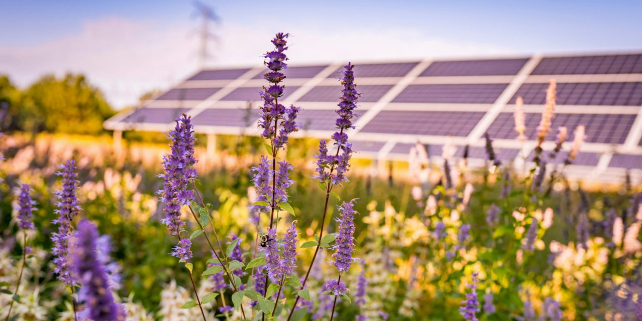 """Usa, il primo parco solare """"dual-use"""": Aurora"""