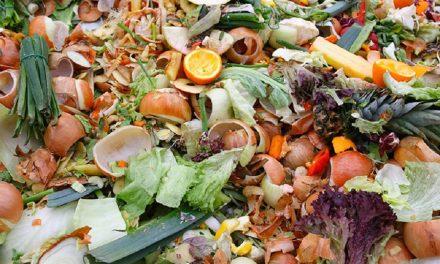 Energia Green da scarti di frutta e verdura