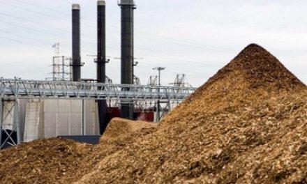 Rinnovabili, dalle biomasse un grande futuro