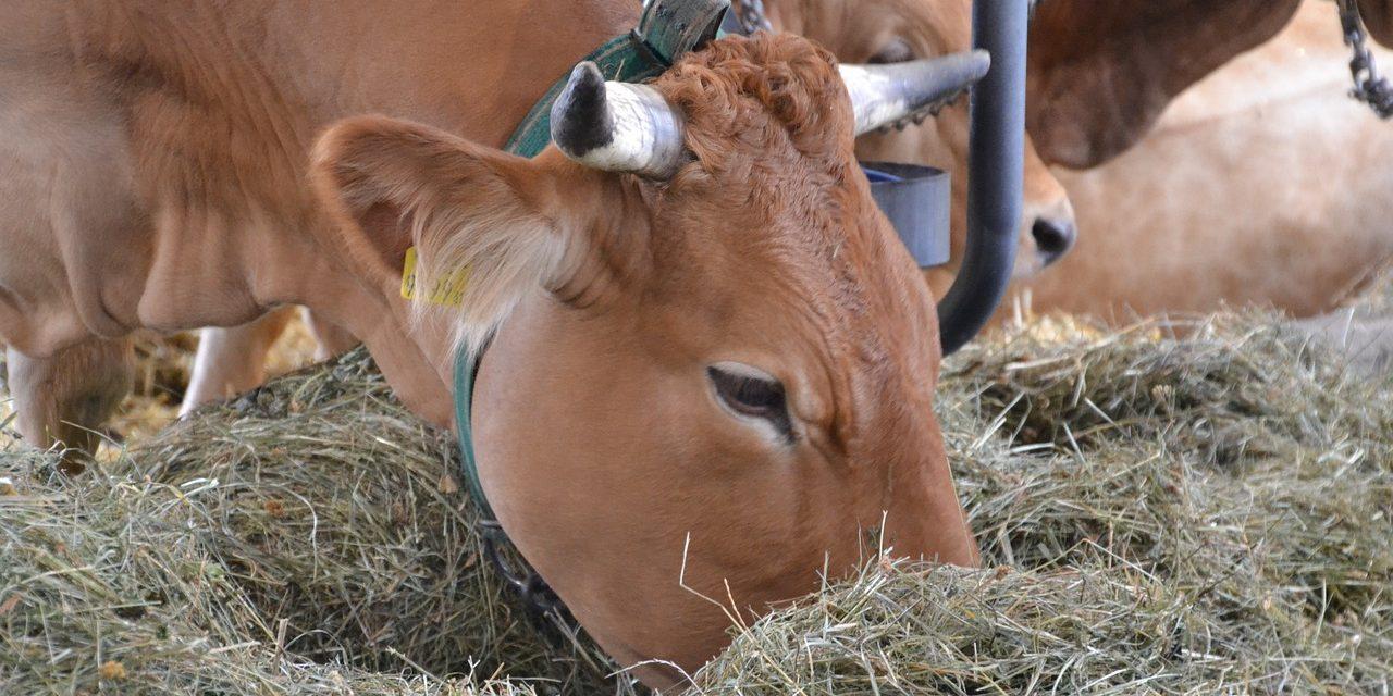 Ambiente, secondo esperti la carne bio non sarebbe più sostenibile di quella tradizionale
