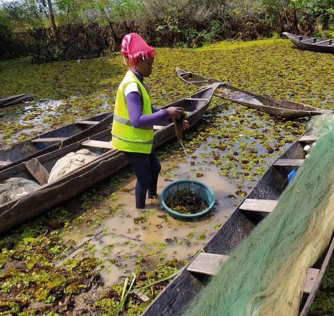 Camerun, la Salvinia molesta mette a rischio il lago Ossa