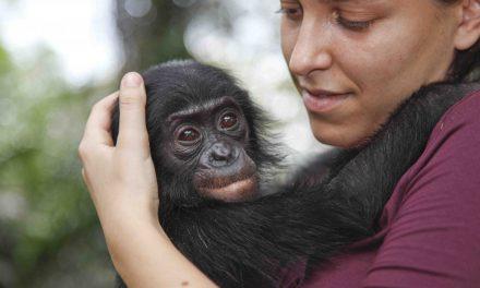 WWF Italia, Alessandra Prampolini nominata direttore generale