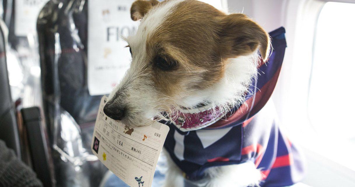 American Airlines, animali a bordo: da 11 gennaio stretta del Governo su regole