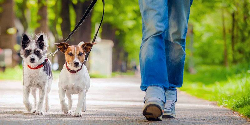 Lockdown: domande e risposte per portare a spasso il cane