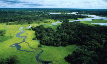 Amazzonia, El Nino ha distrutto oltre 2 miliardi e mezzo di alberi