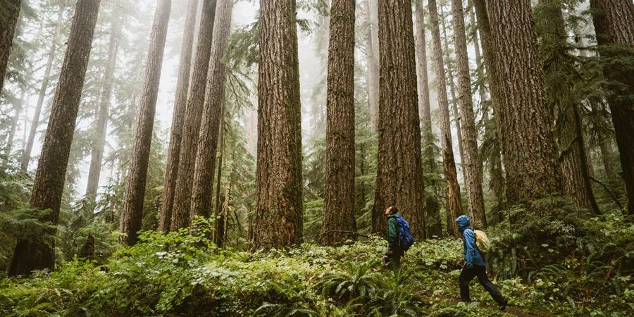 """Milano, con """"Forestami"""" quasi 634mila euro per piantare 18.410 alberi"""