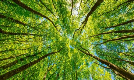 WWF: il guadagno che deriva del ripristino dell'ambiente
