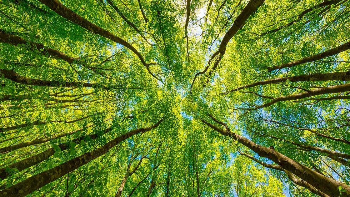 Emilia-Romagna, nuovi fondi per incrementare la superficie boschiva