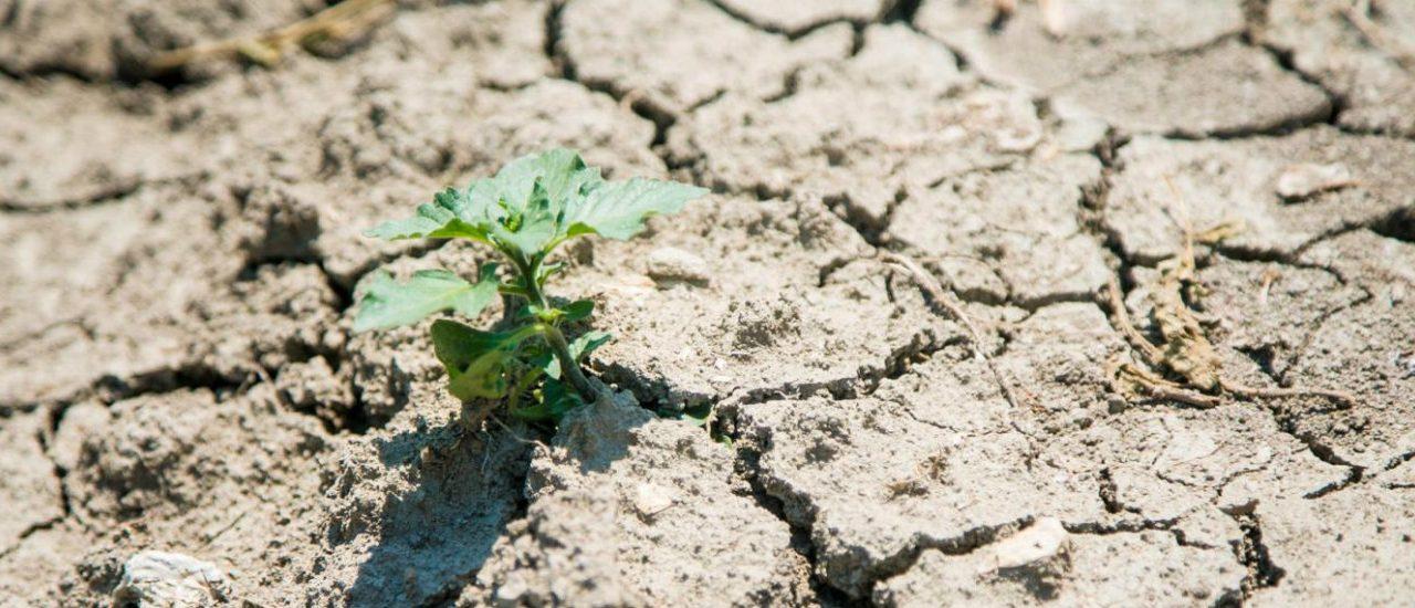Coldiretti: siccità costa all'Italia 1MLD all'anno
