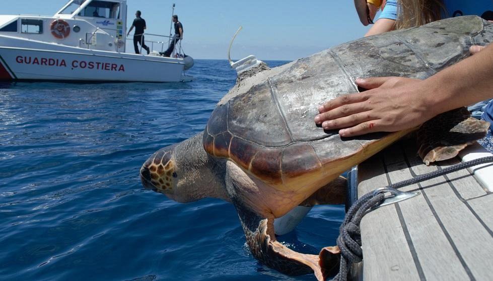 Tartaruga curata e riportata nel mare di Castiglione della Pescaia