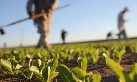 Coldiretti: SOS raccolti senza 50mila lavoratori nei campi