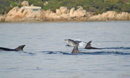 200 delfini l'anno spiaggiati in Italia