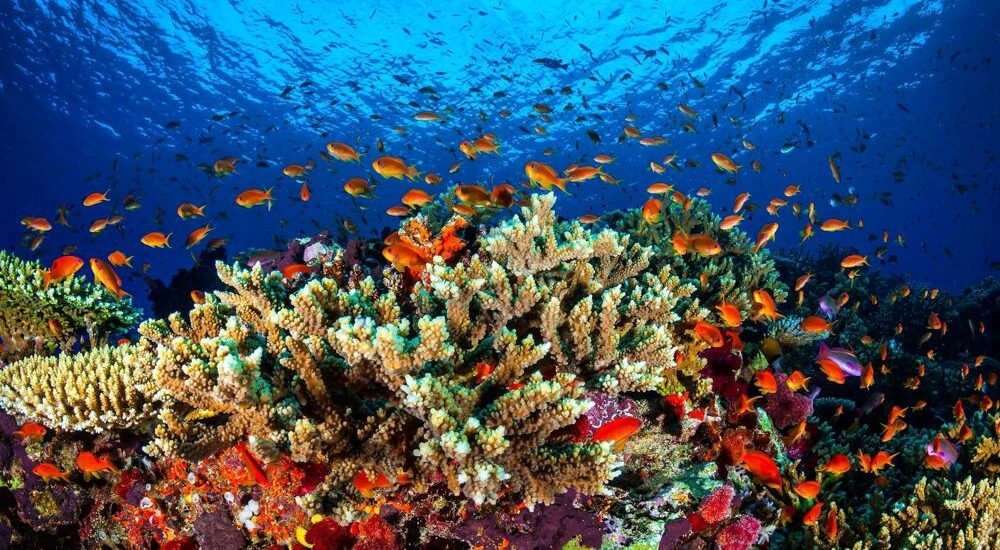 Marevivo: troppe reti da pesca soffocano i fondali marini