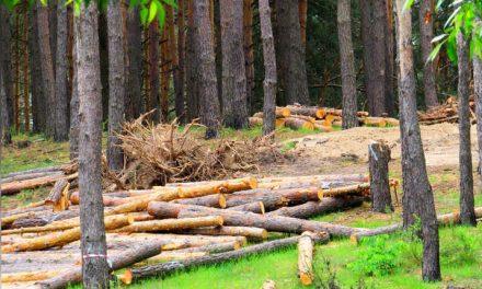 WWF, UE seconda solo a Cina in importazione deforestazione