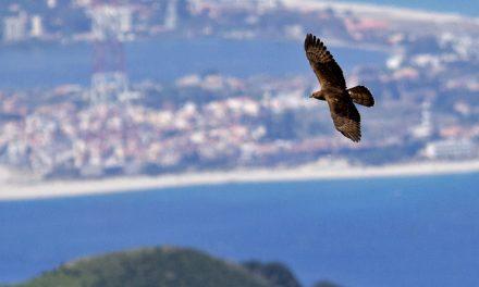 Terna installa dissuasori per avifauna saline di Trapani