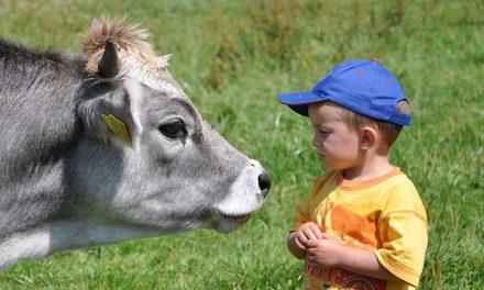 Intelligenza artificiale svela emozioni di mucche e maiali