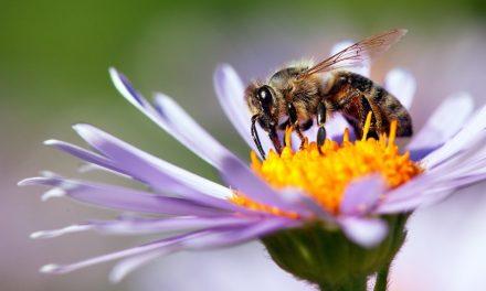 WWF a tutela degli insetti impollinatori