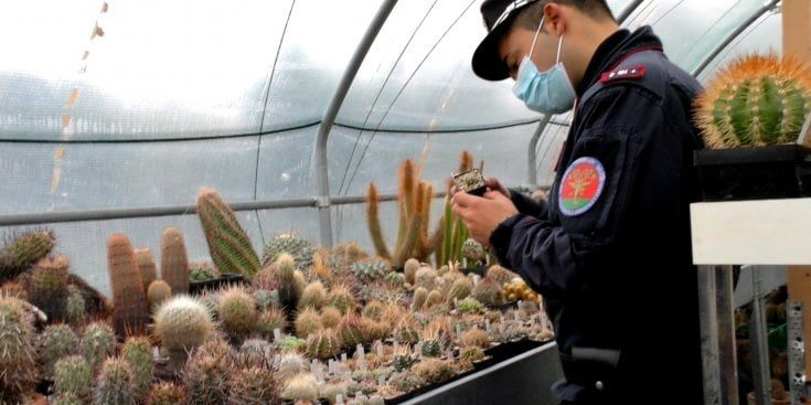 Cactus rarissimi sequestrati e riportati in Cile