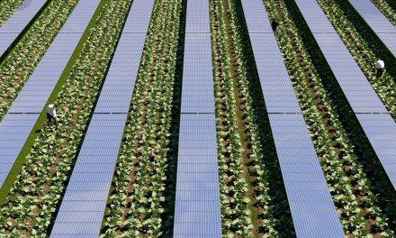 ENEL e CREA, accordo per lo sviluppo dell'agrivoltaico