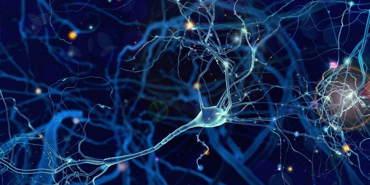 Transistor sinaptici simulano attività cerebrali
