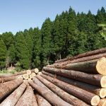 Pari proprietà del legno italiano e quello europeo