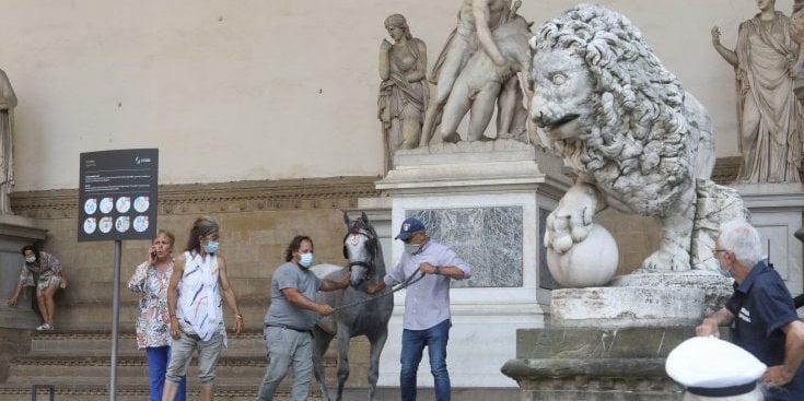 Panico a Firenze: cavallo imbizzarrito travolge l'auto del ministro Lamorgese