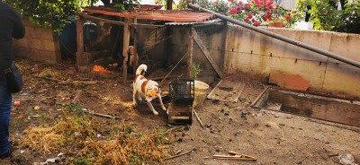 Maltrattamento animali, sequestrati tre cani nel Napoletano