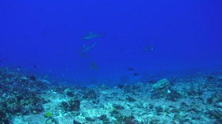 Erosione costiera, nuovo progetto di Enea, Ispra, Cnr e Iuss