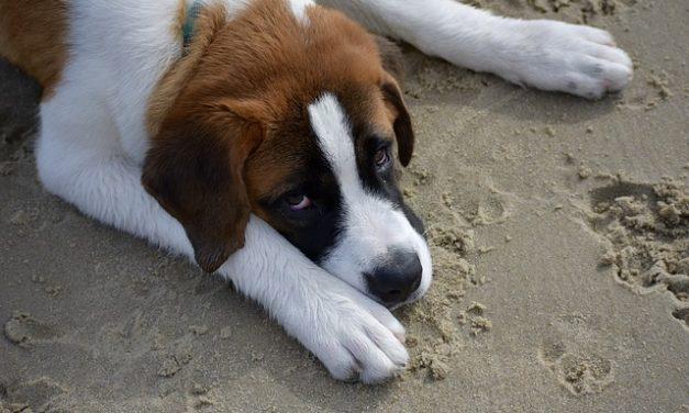 Diano Marina, Oipa contro l'ordinanza che vieta l'ingresso dei cani in spiaggia