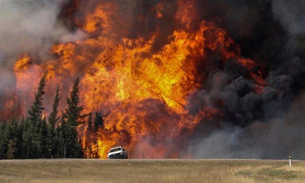 Incendi, Pefc invita alla prevenzione