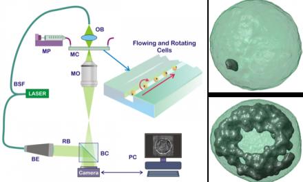 CNR, tecnica per visualizzare in 3D nanoparticelle di grafene nelle cellule